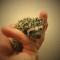 Dominikin ježko chce zachrániť UPside
