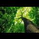 Obraz Koruna stromu