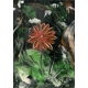 Obraz5 - maľovaný technikou Enkaustika