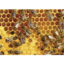 """""""Zážitkové spoznávanie včelínov"""""""