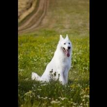 Pluto White Ancilias