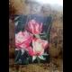 RUŽE V ROSE
