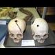 Prehliadka depozitárov Prírodovedného múzea SNM