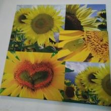 Vymeň fotoobraz Slnečnice za kúpele a rehabilitácie pre postihnutých rodičov
