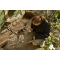 Kŕmenie lemurov kata v ZOO Bratislava